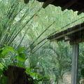 JAVA indonésie mum 2010 350