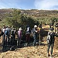 Les olives amères de palestine