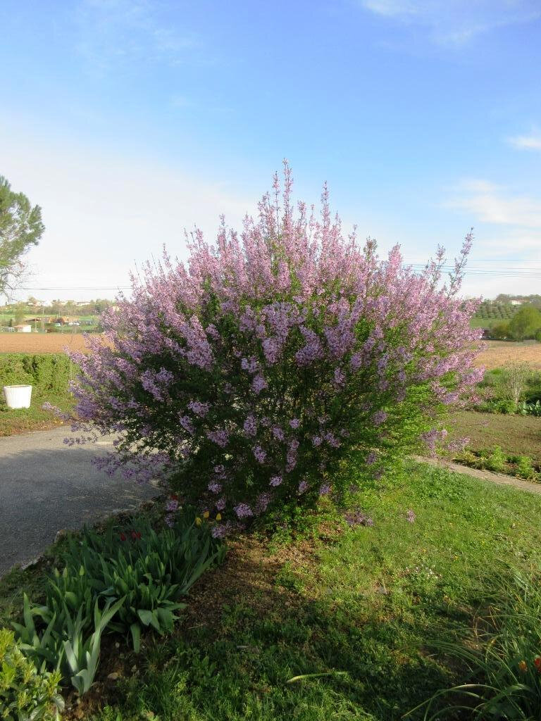 fleur cayrac