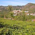 Selas - dans les plantations de thé des Nilgiris, village et écoles