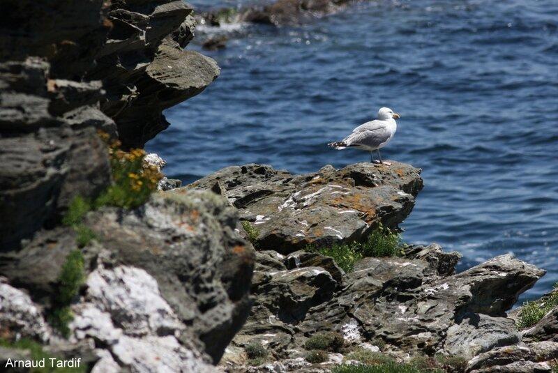 001066 Guidel - L'Ile de Groix - De Stankenn à la Baie des Curés