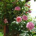 Mes fleurs, mon jardin