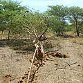 mauritanie et mali 2009 394