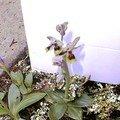 Mes orchidées 4