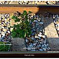 Bercée par le train (rocked by the train)