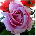 rose annie 1