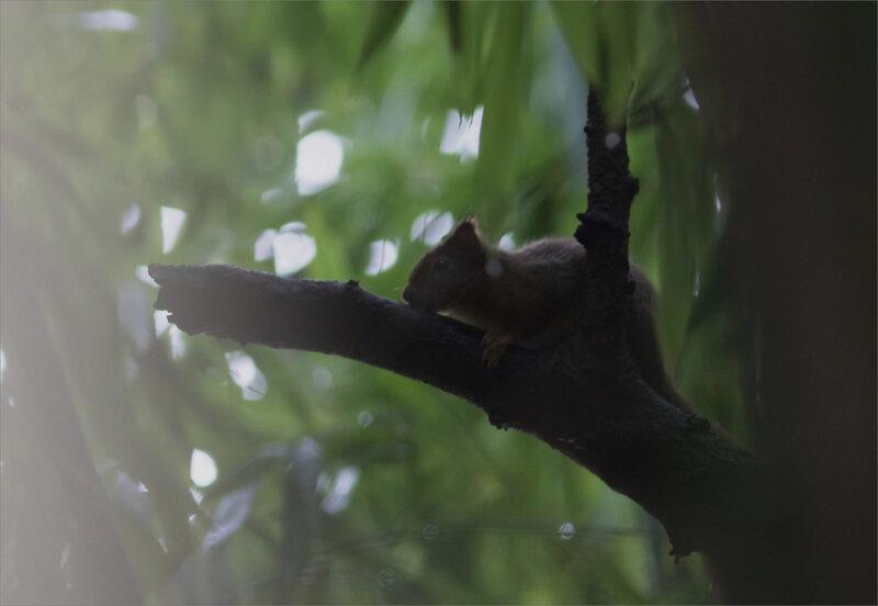 écureuil ombre bambous 2 290120