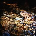grenouille parc ermitage