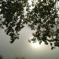brume sur l'étang_4