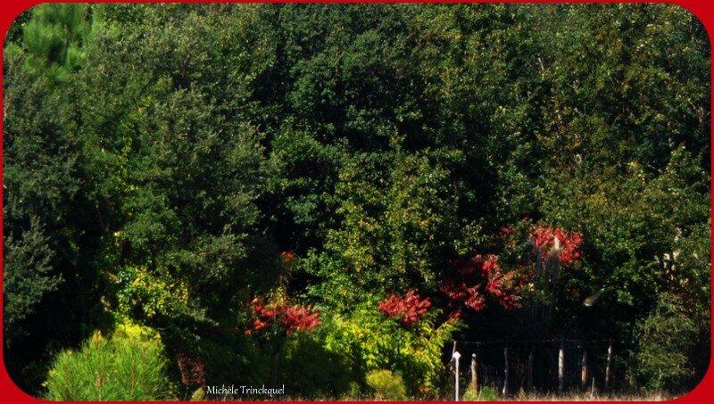 Feuillages automne 0910157