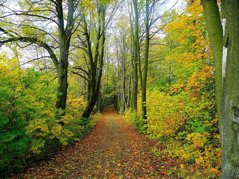 chemin-de-forêt-automne-1560x1170
