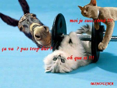 Humour Animaux Photo De Creation Humoristique Bienvenue Chez