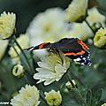Savez-vous comment les papillons passent l'hiver ?