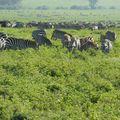 2010-03-09 Ngorongoro (163)