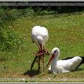 Les oiseaux -