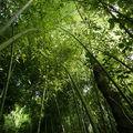 Vacances : bambous