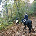 balade liberté à saint brice - cheval nature (16)