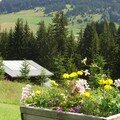 Summer food in the french alps, part v