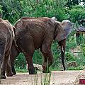 Elephant-(2)HR