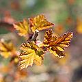 petites feuilles (Copier)