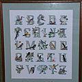 ABC oiseaux