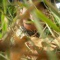 08 - Dans les Forgotten Lands [Yassine Saïdi, octobre 2007]