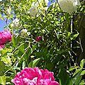 Pleine floraison!!