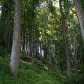 Forêt de grands arbres : certains auraient plus de 180 ans