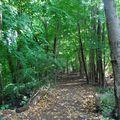 Forêt de Tarrytown