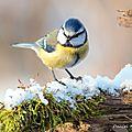 Les oiseaux a la mangeoire cet hiver.