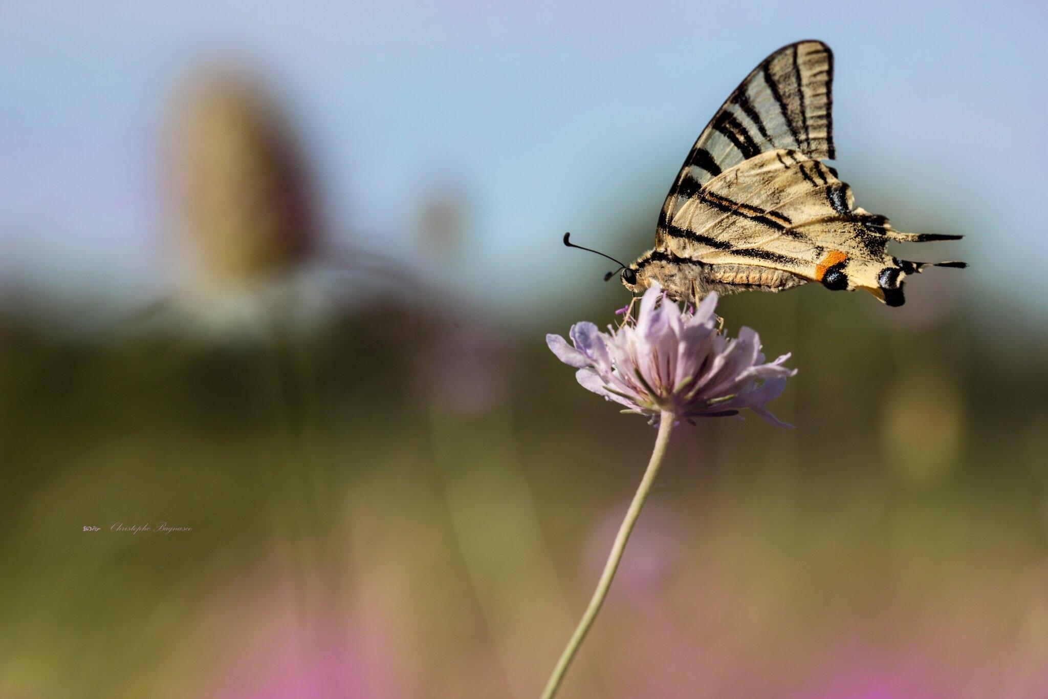 Prairie d'ailes et de pétales