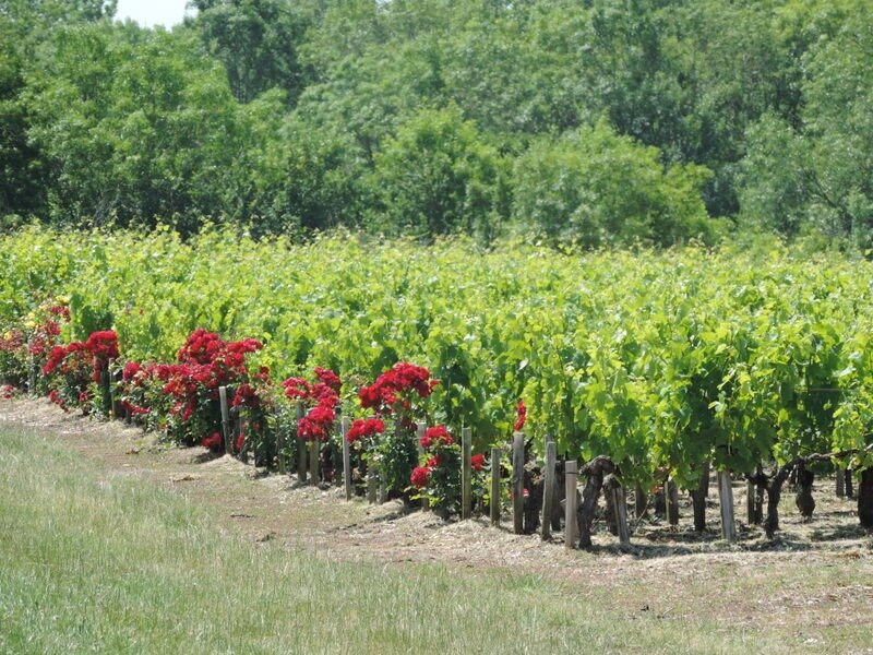 Windows-Live-Writer/Mdoc-Haut-Mdoc--30