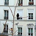 PARIS MONTMARTRE - Diane VAILLANT