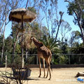 Trip usa - 25th sept : san diego zoo and balboa park
