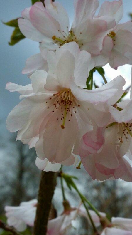 Premières fleurs de printemps :