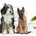 9564110_groupe_d_animaux_de_compagnie_assis_en_face_de_fond